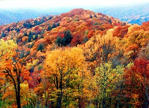 Fall Foliage in the Great Smoky Mountains
