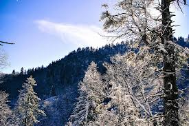 Smoky Mountains in Winter
