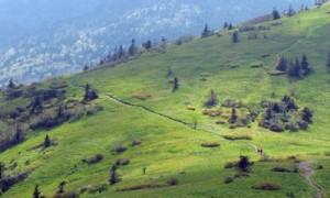 atbaldspic 300x180 Appalachian Trail
