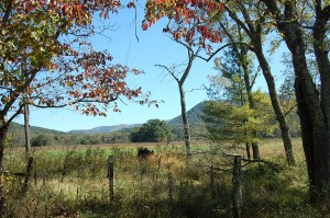 laneview 300x199 Controlled Burns Planned For Cades Cove